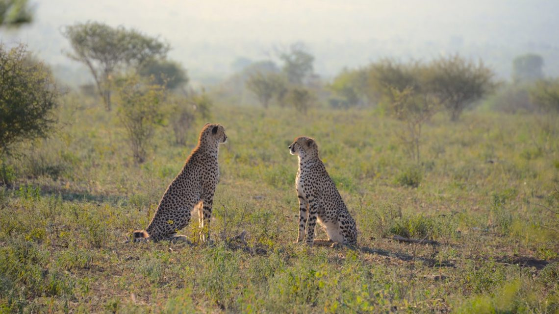 Kruger National Park, visite incontournable